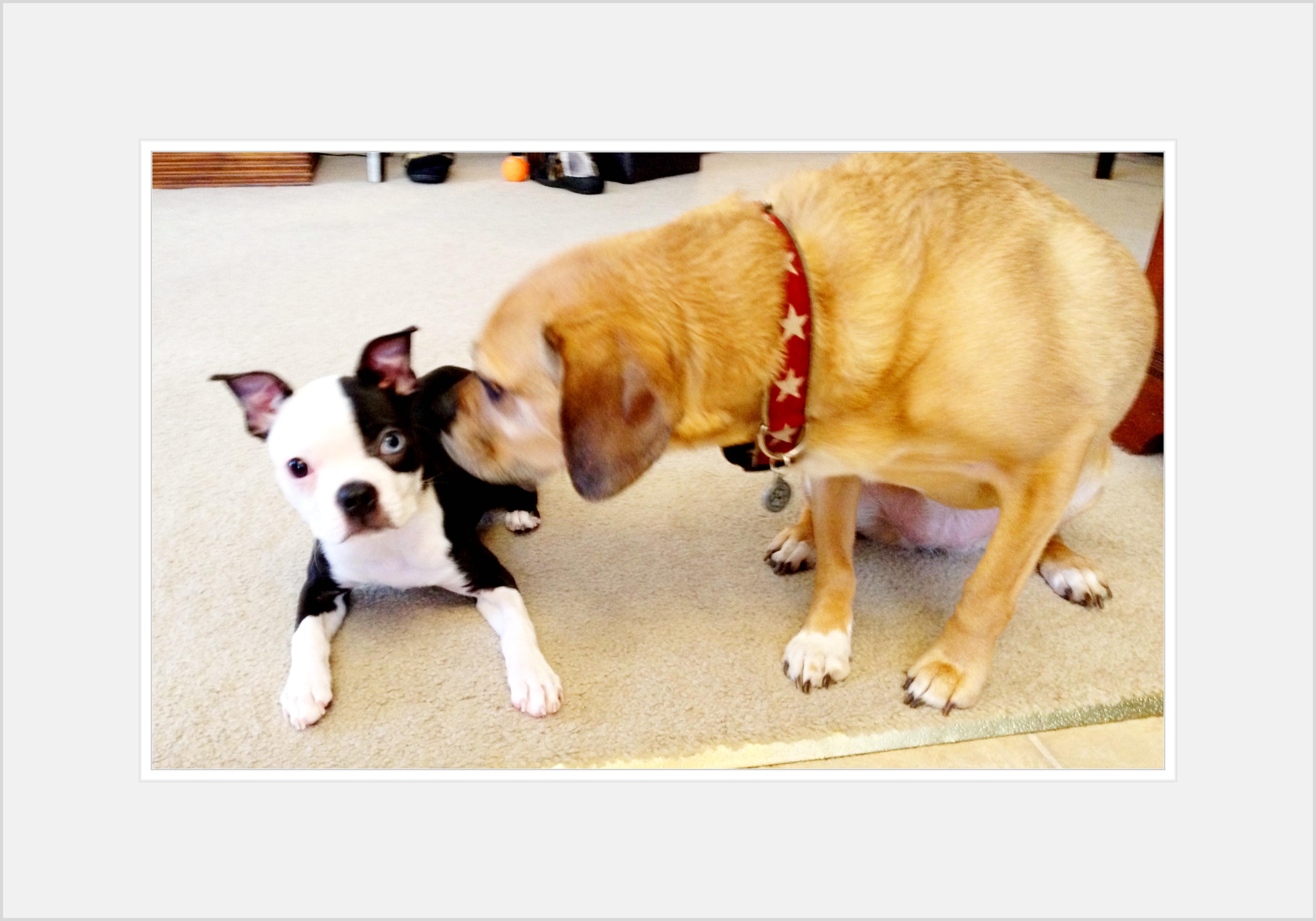 Designer Doggies - About Us - photo#29